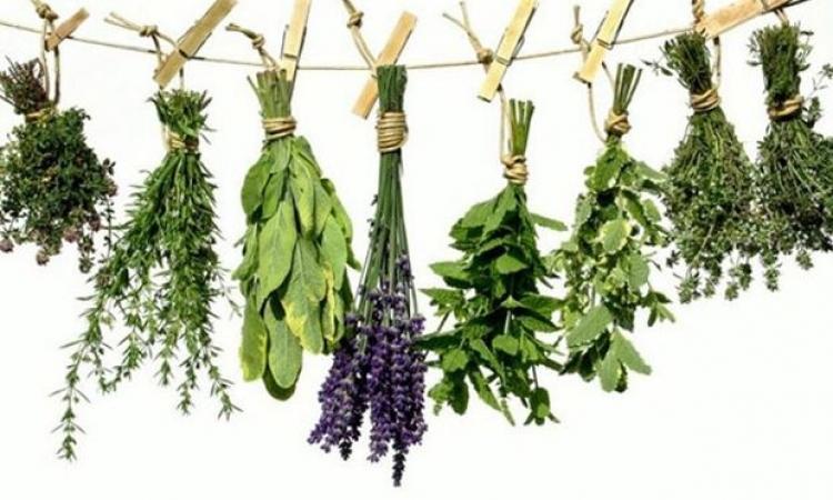 Τα 13 βότανα που μας κανουν καλο