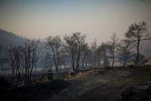 Η κυβέρνηση παραδίδει τις καμένες περιοχές της Εύβοιας στα ιδιωτικά συμφέροντα